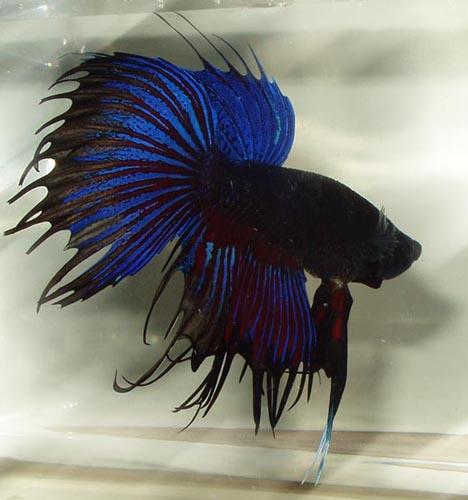 хв Вселенную.  Хочу увидеть красивую рыбку.  Отправлено 22 Ноябрь 2010 - 18:02.